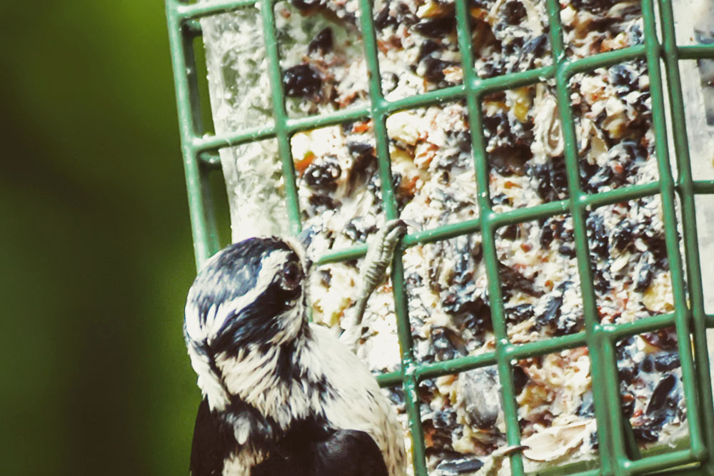 vogeltaart