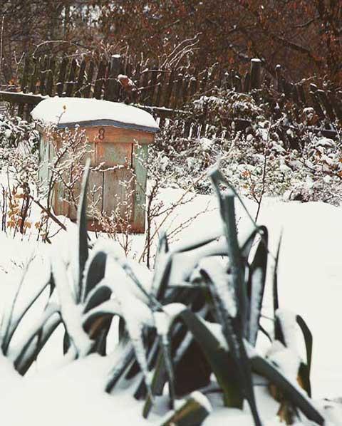 bescherm planten tegen kou