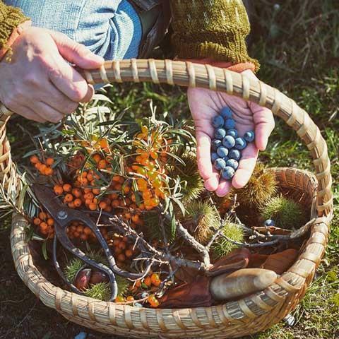 eetbaar bos herfst